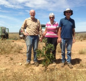 Tree planting along a road reserve at Worlds End on the Heysen Trail, south of Burra