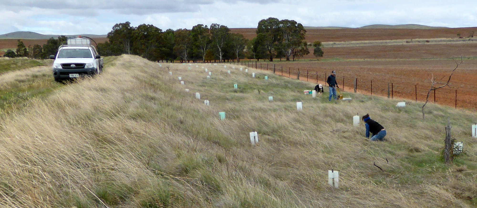 Volunteers planting trees along the Heysen Trail near Spalding
